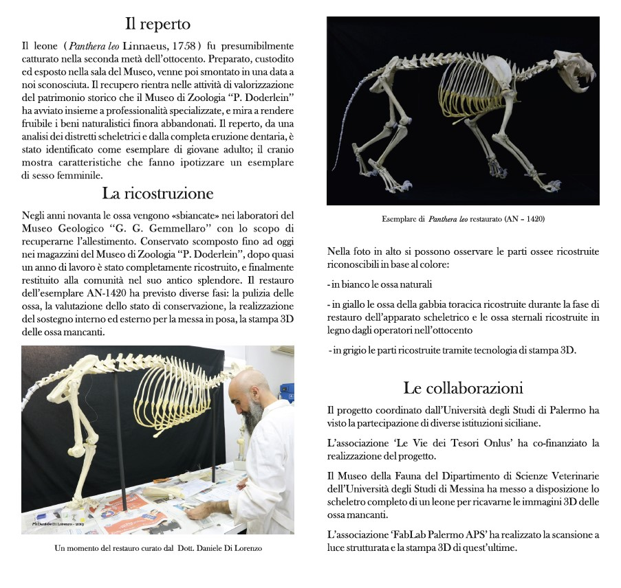 pantheraleo-fablab-palermo-museo-zoologico-doderlein-scansione3d-stampa3d